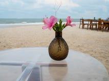 Roses chinoises sur la plage. image stock