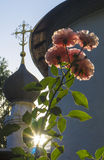 Roses in the church garden. Sunlight through the leves. Cross and roses Stock Photo