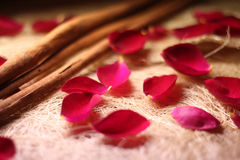 Roses and cinnamon. Cinnamon sticks and rose petals Stock Image