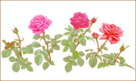 Roses Clip art. Stock Image