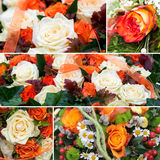 Roses collage Stock Photography