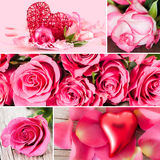 Roses collage Royalty Free Stock Photography