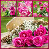 Roses collage. Collage of different roses photos Stock Photos