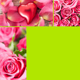 Roses collage royalty free stock photos
