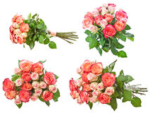 Roses collection Stock Photography