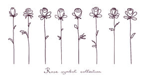 Roses. Collection of  rose flower sketch on white background Royalty Free Stock Photography