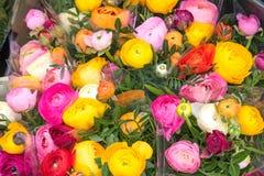 Roses colorées à vendre à un marché Photos libres de droits
