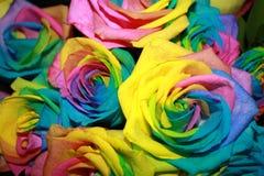 Roses colorées Photo libre de droits