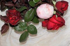 Roses colorées Image libre de droits