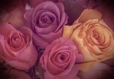 Roses colorées de vintage avec la vignette Images stock