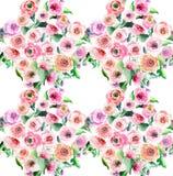 Roses colorées de wildflowers de beau ressort magnifique sophistiqué lumineux mignon merveilleux avec le modèle de bourgeons Image libre de droits