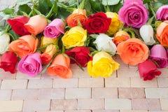 Roses colorées lumineuses Photographie stock