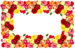 Roses. colorful flowers frame Stock Images