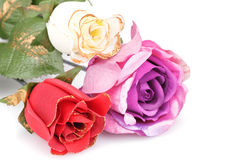 Roses. Colorful roses isolated on white background Royalty Free Stock Photos