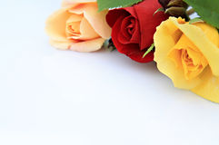 Roses composition Stock Photography