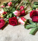 Roses on the Concrete Floor. Wilting Roses layed on the Gray Craked Concrete Floor Stock Photo