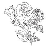 Roses contour drawing Royalty Free Stock Photos