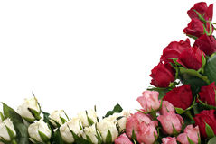 Roses at the Corner. Red, pink and white roses at the corner with text free space Royalty Free Stock Image