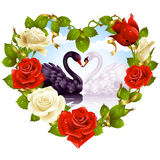 Roses and couple Swans. Rose frame in the shape of heart and couple swans Royalty Free Stock Image