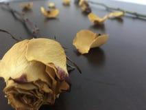 Roses définies images libres de droits