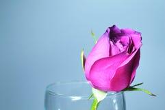 Roses d'amour ou de Valentine pour des amants. Image libre de droits