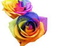 Roses d'arc-en-ciel Photo stock