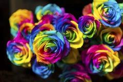 Roses d'arc-en-ciel avec les milieux noirs Photos stock