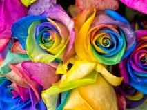 Roses d'arc-en-ciel en gros plan Images stock