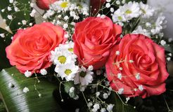 Roses and daisies Royalty Free Stock Image