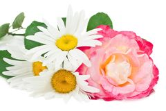 Roses and daisies Stock Photos