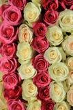 Roses dans différentes nuances de la disposition rose et nuptiale Photographie stock libre de droits