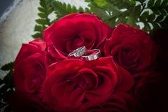 Roses dans l'amour avec des anneaux photos stock