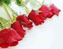 Roses dans l'eau Photo stock