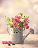 Roses dans la boîte d'arrosage Images libres de droits