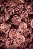 Roses dans la couleur fanée Image libre de droits