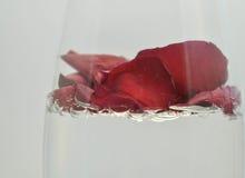 Roses dans la glace Photos libres de droits