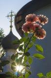Roses dans le jardin d'église Photo stock