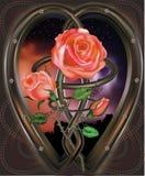 Roses dans le réseau Photos libres de droits