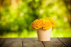 Roses dans le seau Photographie stock libre de droits