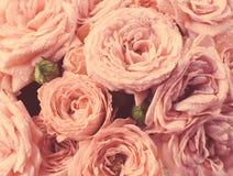 Roses dans le style de vintage, couleurs fanées Image libre de droits