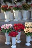Roses dans les bouquets dans des vases en plastique Image stock