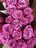 Roses roses dans les groupes Photos libres de droits