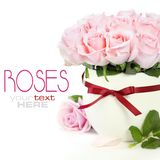 Roses dans un bac images libres de droits