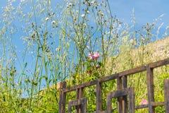 Roses roses dans un domaine photos libres de droits