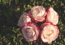Roses dans un vase, sur l'herbe Photo libre de droits