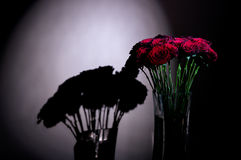 Roses in the dark. Red roses in the darkness Royalty Free Stock Images