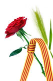 The roses day Stock Photos