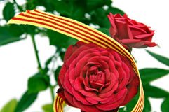 The roses day Royalty Free Stock Images