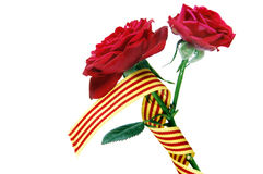 The roses day Stock Photo