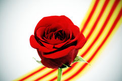 The roses day Royalty Free Stock Image